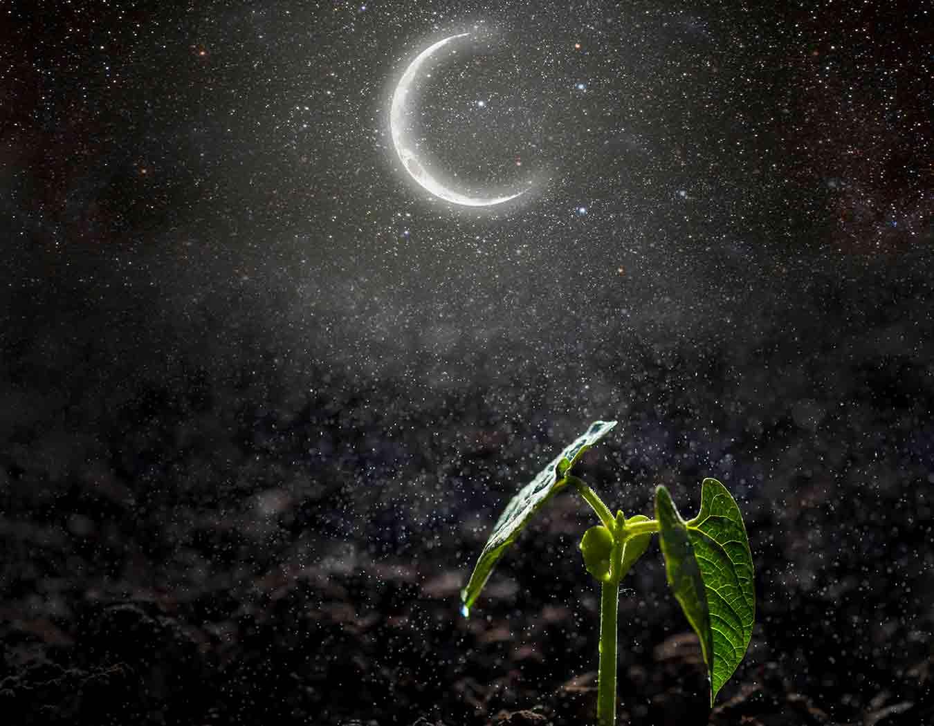 Judías a la luz de la luna decreciente en el hemisferio norte y creciente en el hemisferio sur